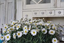 Daisies-> my favorite flowers