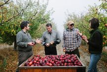 Ciders of Sonoma County/California and Their Makers / Celebrates Ciders made in Sonoma County from Apples Grown Here, and their Makers.