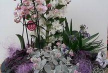 Composizione nei toni del rosa e viola