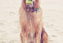 dogs / by Pamela Redsicker