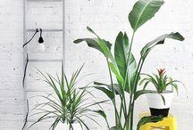 plantas / by Anna Bado
