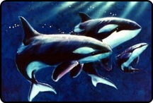 Orcas * Killer Whales * Wolves of the Sea