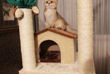 Adnan Oktar'ın kedisi Tomasin