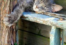 Les chats au jardin