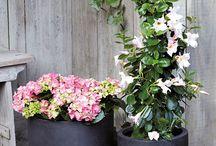 THEMA | Garden Romance / De zoete kleuren en lichtblauwe accenten van Garden Romance geven de tuin een romantische sfeer. Bij dit thema passen accessoires als rieten manden, sierlijke vazen en veel (witte) bloemen. De items uit dit thema zijn ook erg geschikt om cadeau te geven, bijvoorbeeld met Valentijnsdag of Moederdag.