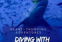 Best diving in the Pacific / Best scuba diving spots around the Pacific! Follow our contributors in their adventurous underwater journeys around the Pacific. Contact us to join us!