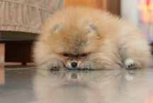 fluffypuppy / mine!