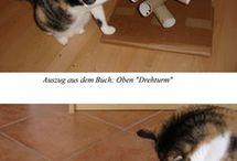 Fummelspiele Katzen