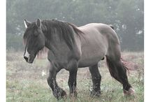 Horse Things