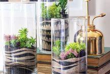 Växter och plantering
