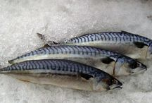 Pacific Mackerel Frozen - Mackerel Frozen Supplier