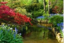 Gardens, flowers, trees   Jardines, flores, plantas / Jardines de ensueño, flores, árboles y muchos colores! ;)