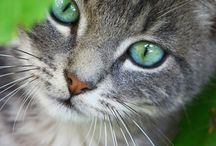 Katter ❤️