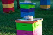 Arı ve arıcılık