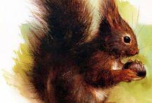 dierentekeningen Rien Poortvliet