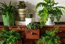 Houseplants / All about houseplants, indoor plants. Put your plants inside to make the room refreshed.