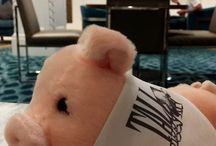 Tall Piggy: Another Level of Stupidity