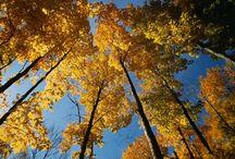 Quattro stagioni : autunno / Les merveilles de la nature en fin de saison...