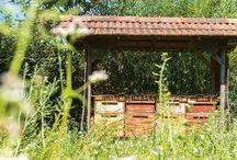 De Tuin van Jan / Rondom ons kantoor in Zoetermeer hebben we een biodynamische tuin van 1 hectare groot. Dit kleine paradijsje wordt dagelijks verzorgd door onze toegewijde tuinploeg onder leiding van Jan Graafland. Jan zal hier mooie beelden en leuke weetjes delen over alles wat groeit en bloeit in onze tuin.