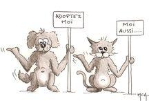 Bob et Paulo / Situations insolites d'animaux facétieux...!!!