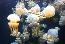 Monterey Bay Aquarium / by Bay Park Hotel