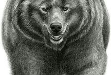Bear Art TERM 4