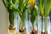 Flower Growing Tips / A collection of helpful hints and tips for maximizing your flower-growing efforts.
