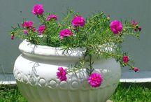paisagismo plantas