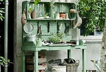 Gardening / Ideas, plants