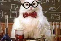 Science Funnies