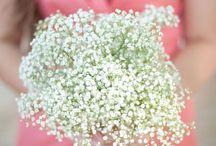 The Wedding / by Jill Haning