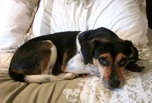 Animals & Lovely Pets / Animales & Bellas Mascotas