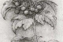 Disegni antichi di Leonardo Da Vinci