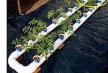 Quero Plantar / Hydroponia