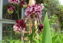 mon jardin / printemps