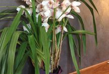 Month of orchids / This month's inside our Restourant TOSCANA FAIR you can buy and watch the splendid specimens of orchids.