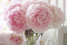 пион розовой комноты