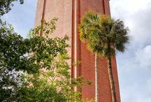 University of Florida / by Simone Lay