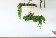 DIY: Garden - Sexy Succulents