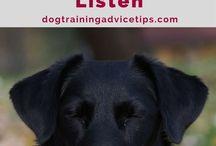 Dog trainning