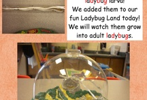 Classroom Ideas Science / by Jodi Going