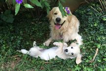 Dogs Delight / Loveable caring and sharing dogs