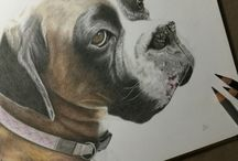 Boxer dog portraits / A selection of lifelike, high end pet portraits from the Tilly & Blue range