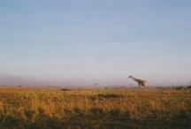 Travel: Africa