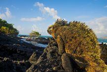Trip Galápagos 2015