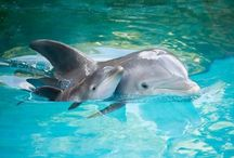 Dolphins / Beautiful and intelligent