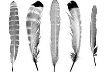 Printables- Birds / by Amy Baird Lynch