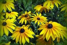Pretty Flowers / by Carrie Biggs Burnett