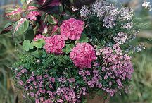 Awesome Container gardens / Show us your beautiful masterpieces here!