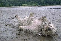 Cairn Terrier Arty Laughs / Silly, beautiful stuff from the world of Cairn
